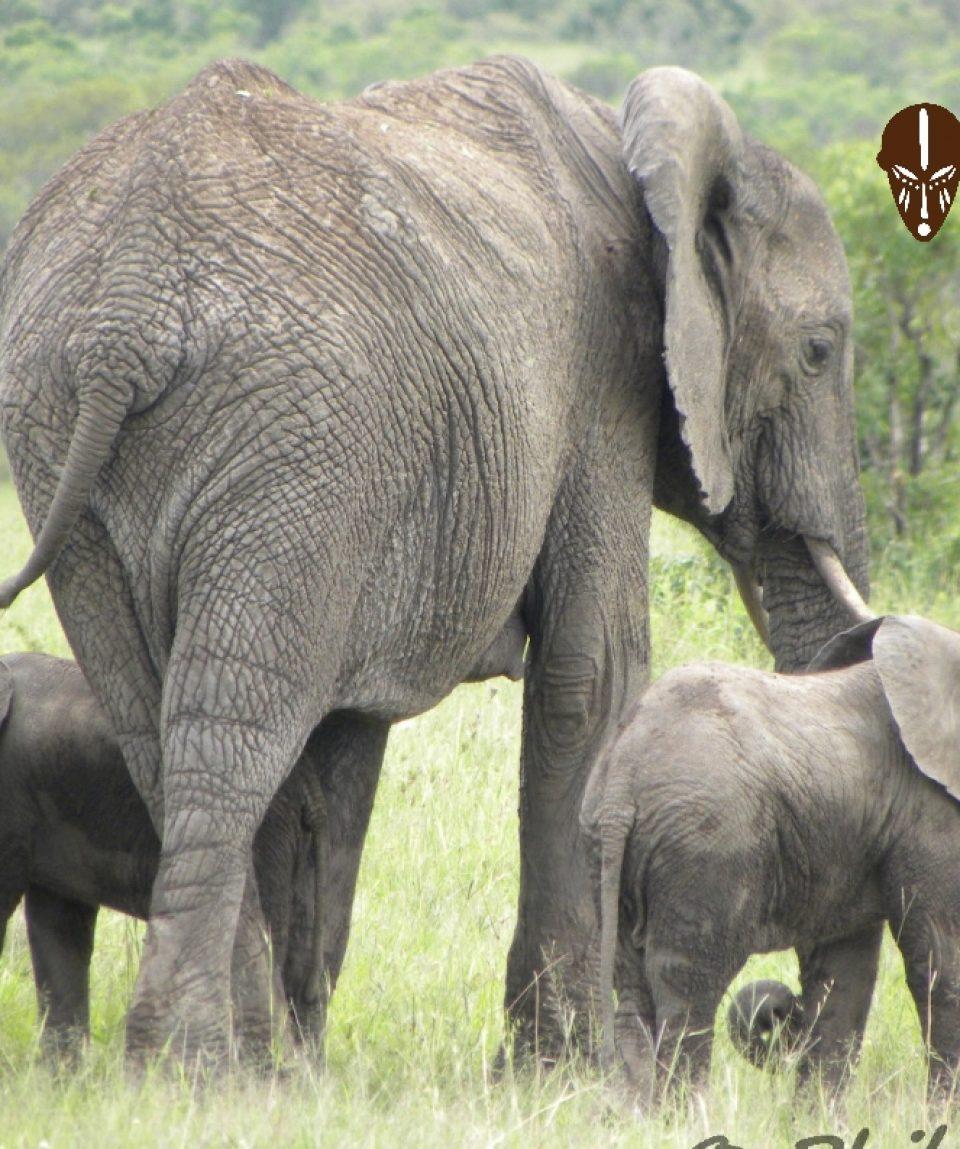 Beads_Safaris_Elephants_Mara