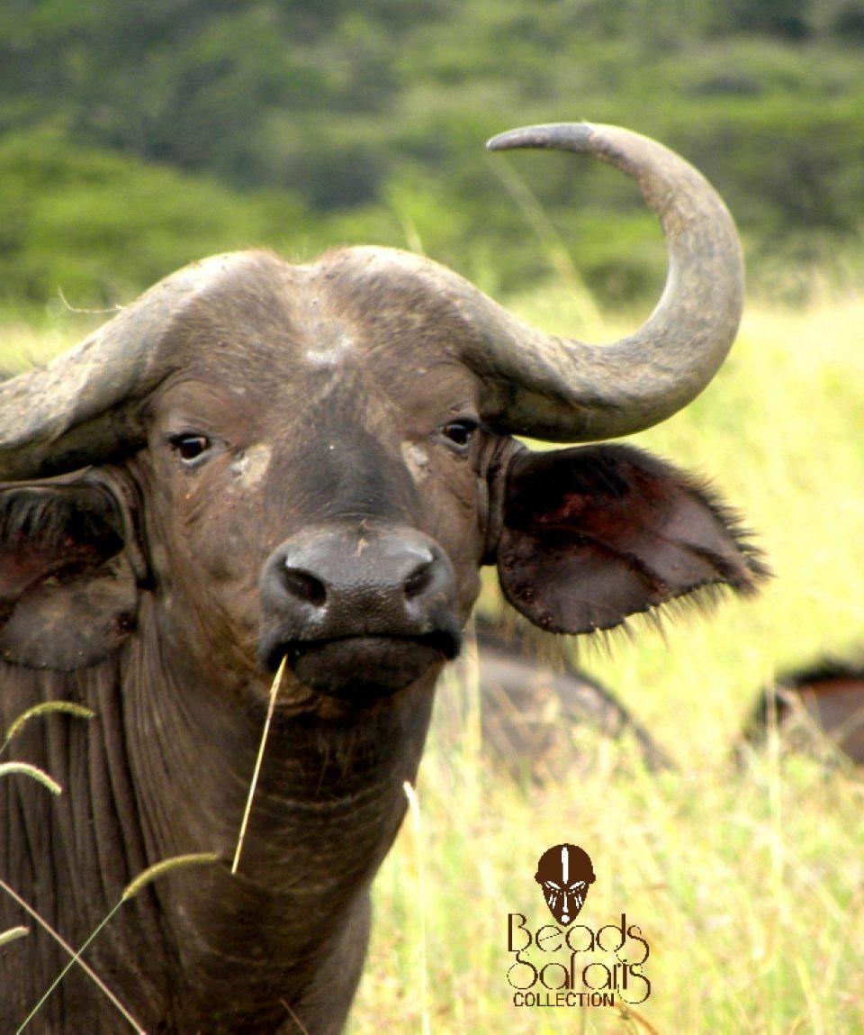 10 Day Kenya Birds And Big Game Safari