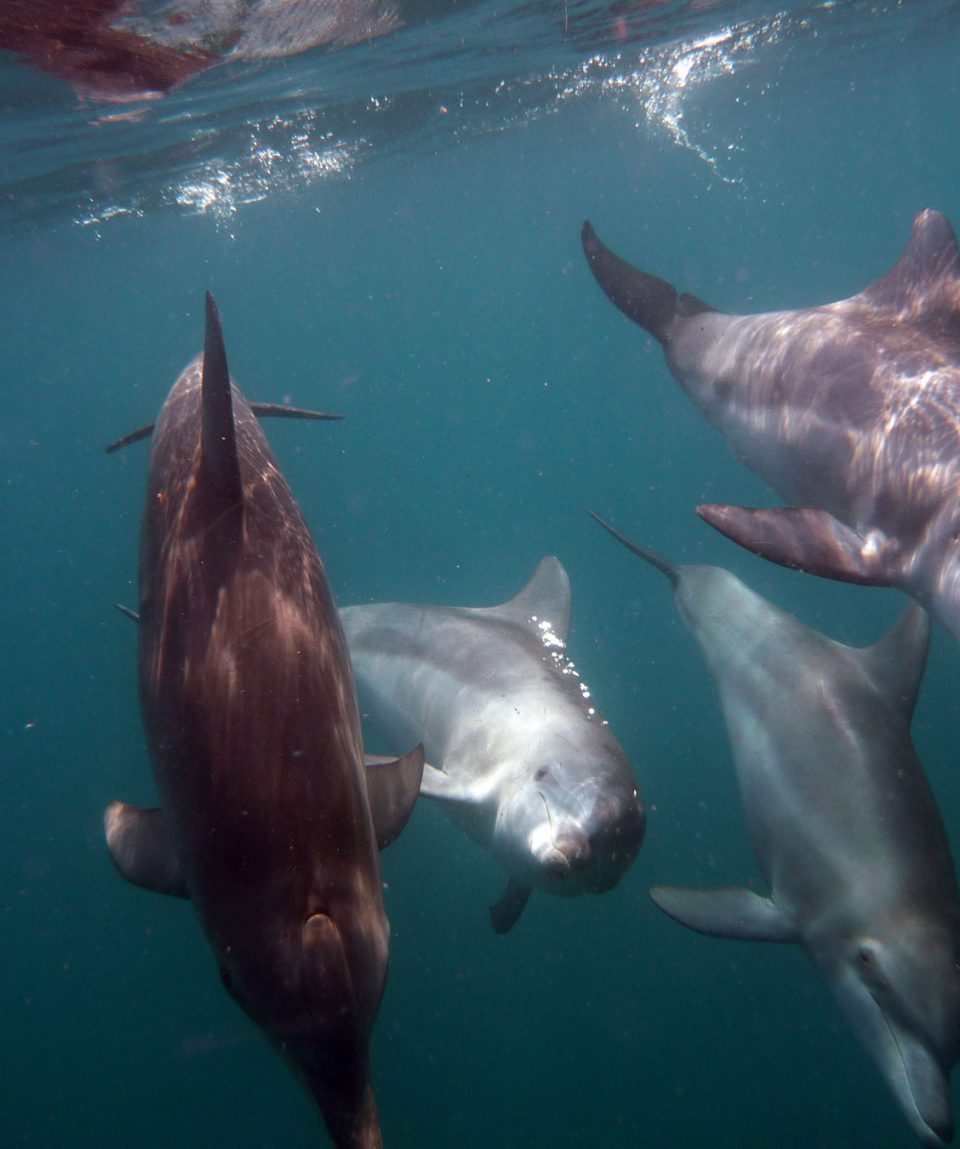 4---Kizimkazi-Dolphin-Adventures