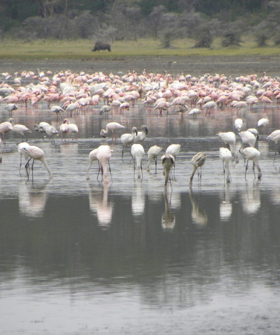Flamingos_Lake_Nakuru_Beads_Safaris_Collection
