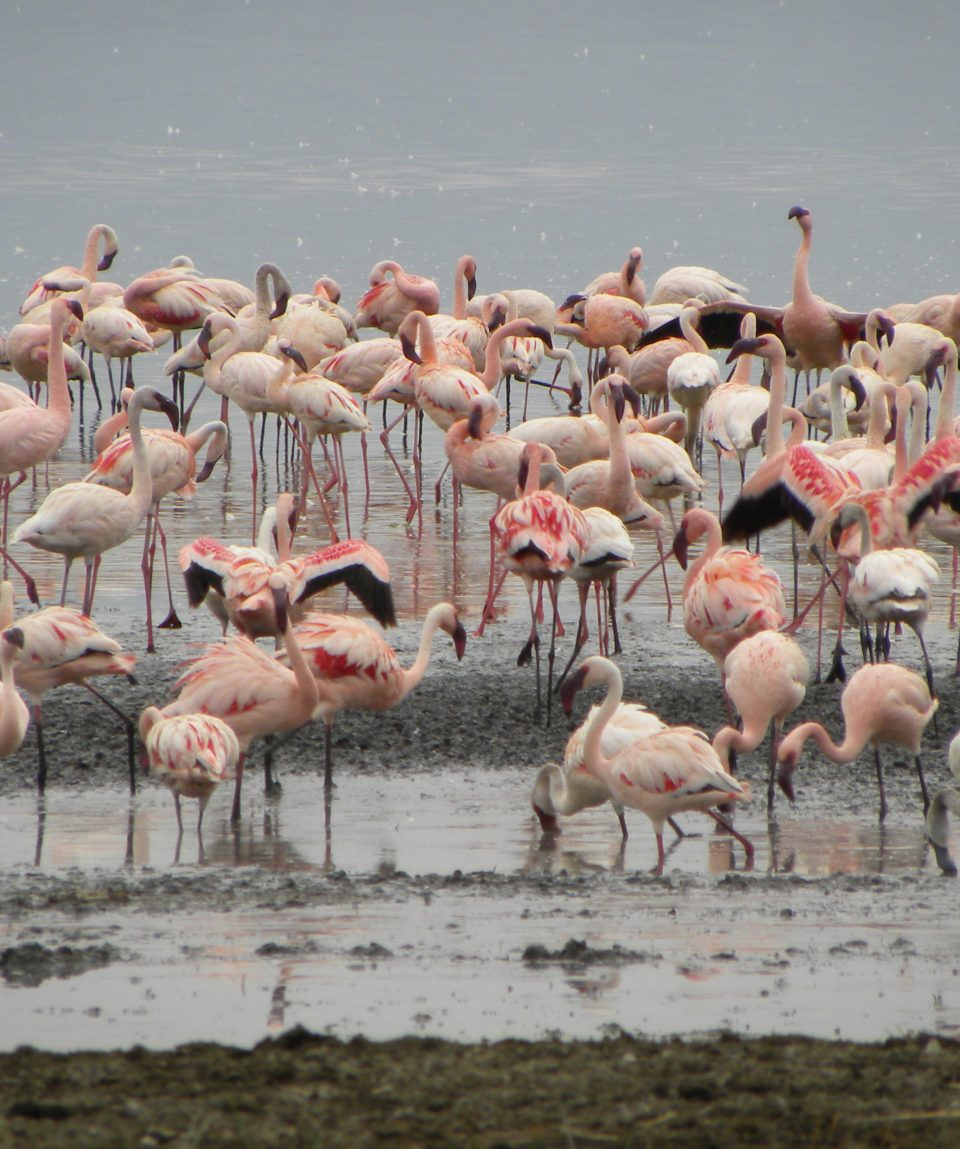 Beads_Safaris_Collection_Flamingoes