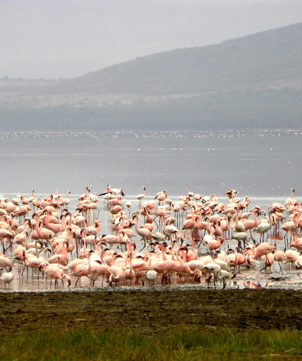 Lake_Nakuru_Lake_overview