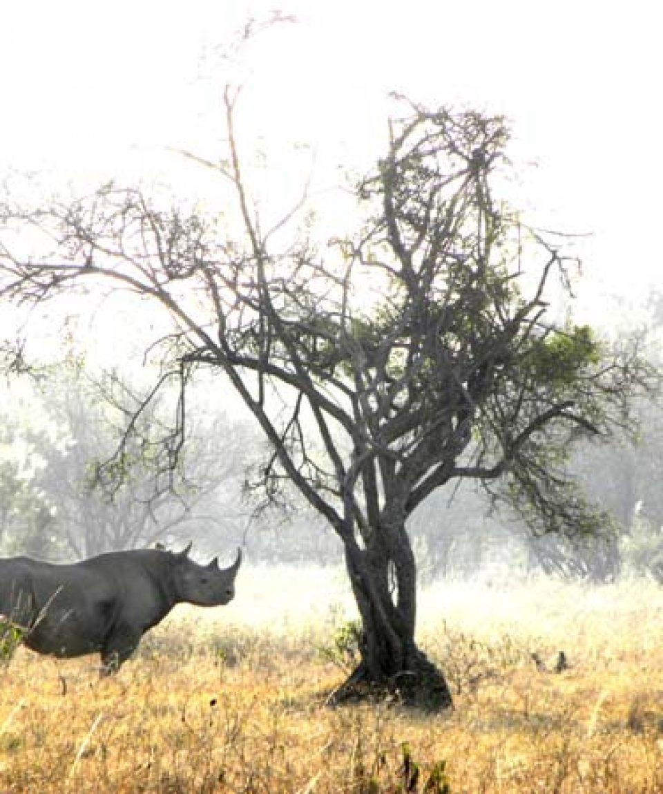 Lake_Nakuru_Rhino_Beads_Safaris_Collection