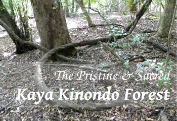 Kaya Kinondo Forest Cover PIC