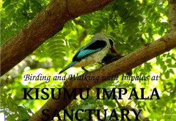 Kisumu Impala Cover PIC Beads Safaris Collection